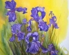 Original watercolour painting, purple iris,